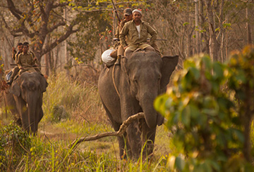 Elephant Safari, Manas National Park