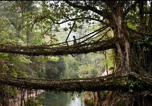 Trek to living root bridge