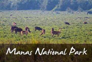 Manas National park overview