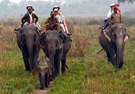 Elephant Safari Kaziranga, Kaziranga travel guide