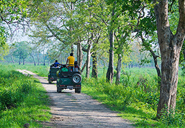 Jeep Safari Kaziranga