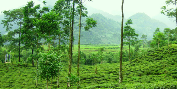 Complete travel guide on Assam Tourism