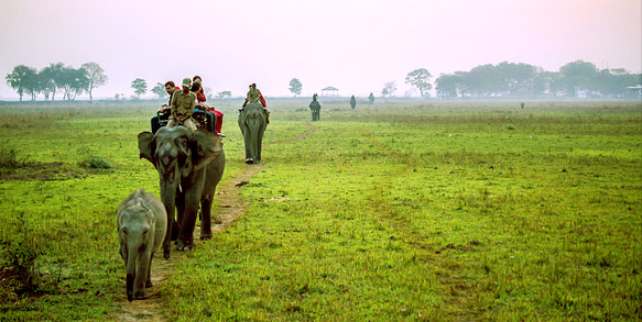 Things to do in assam