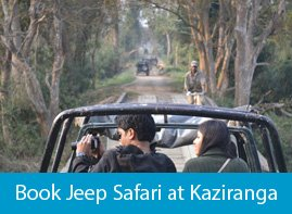 Jeep Safari at Kaziranga