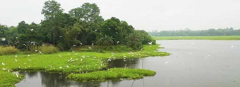 Bird watching tour in Assam and Arunachal Pradesh | Bird ...