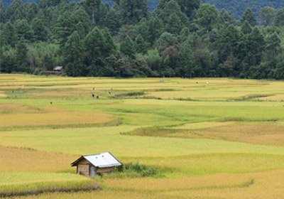 Ziro tourism package